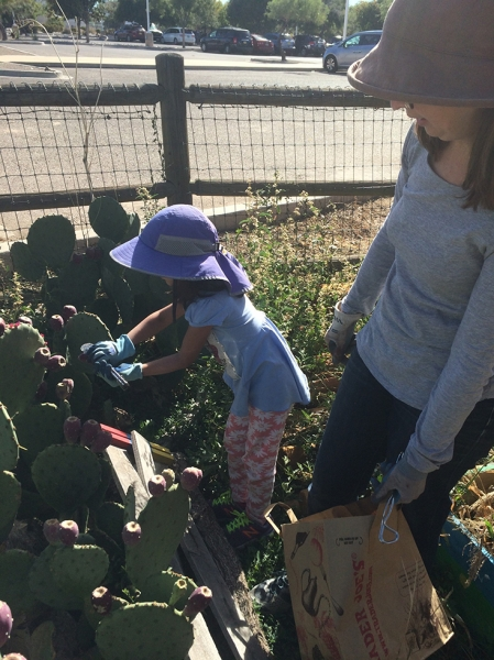 Prickly Pear Family Workshop