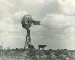 Cows under a windmill