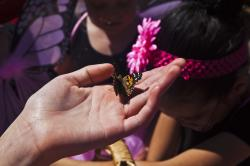 Monarch Butterfly Alights on Child's Hand