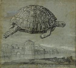 Tortoise and View of a Walled, Coastal Town