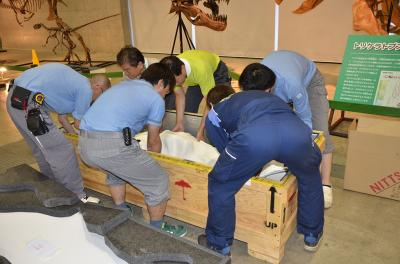 "Technicians at the Nagoya Science Center, Japan, unpack a fossil from the New Mexico Museum of Natural History and Science on display in preparation for the opening of ""A Great Journey of Dinosaurs"" exhibit, March 15, 2017."