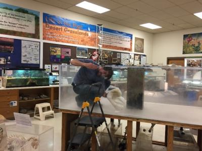 30-NMMNHS- Snaplet-  Museum Volunteer Kenny Broyles, polishing aquarium winter 2017. Snaplet in her old tank in the background.  Photo: NM Museum of Natural History &  Science.