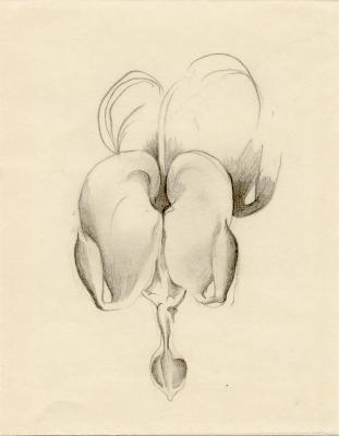 Untitled (Bleeding Heart), 1928