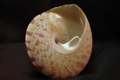 Museum opens exhibit on Molluscs