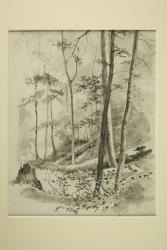 Untitled forest scene