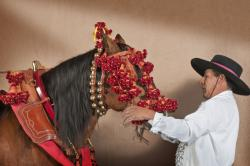 Roberto Quijandría dressing Dorado de Domeq in the traditional horse gear for carriage. Horse gear by Vicente Rodríguez Robles, Sevilla, Spain