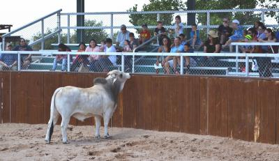 Brahman with Crowd